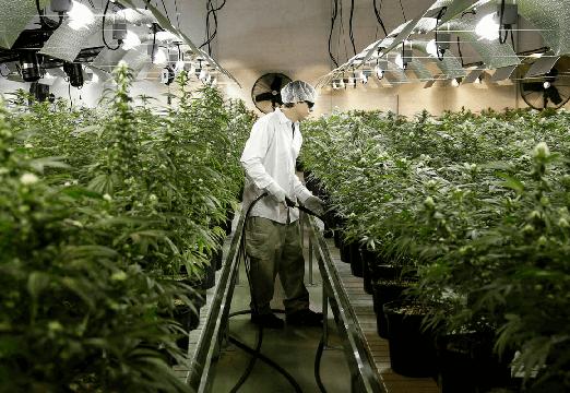 weedbase coltivazione