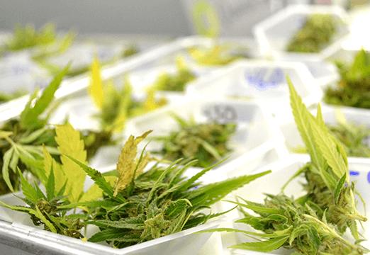 weedbase gestione