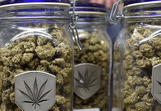 weedbase prodotto finale marijuana legale italia